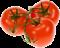 rajčiny a papriky
